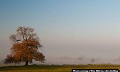 Little Gidding morning mist