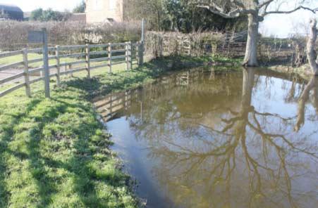 Chapel End Pond after restoration
