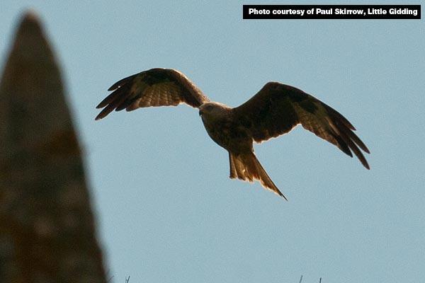 Red Kite over Little Gidding