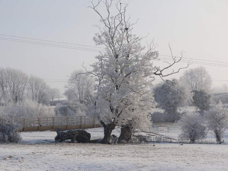 Haw frost, Great Gidding, February 2012