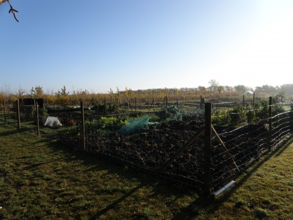 allotments are in full production