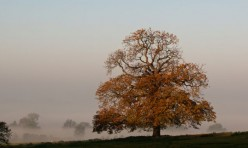 Morning mist, Little Gidding. Photo: Paul Skirrow