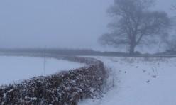 Fog and snow at Oak Tree Corner