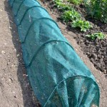 Netted plants on Great Gidding Allotments