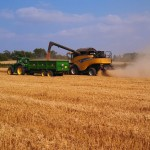 Harvest in Great Gidding