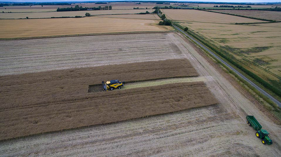 Rapeseed harvesting, Great Gidding 2015