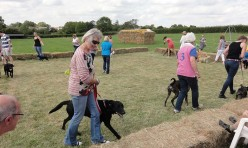 Woof! Great Gidding Dog Show 2015