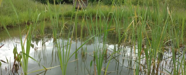 Pond Dipping event