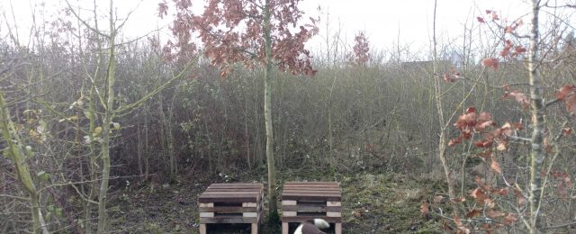 Jubilee Wood long term maintenance project