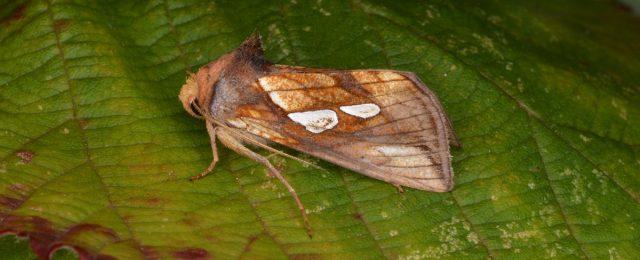 Moth night part 2