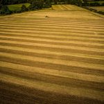Farming in Great Gidding