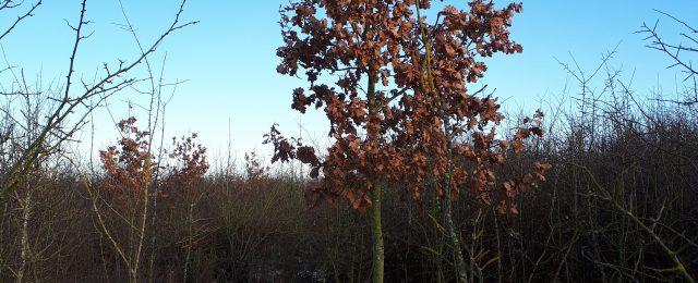 Jubilee Wood in January 2019