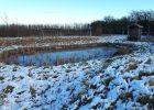 Jubilee Wood in December