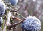 November in the Jubilee Wood