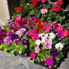 <em>Not just</em> 'Great Gidding Spring Plant Sale and Social Evening'…