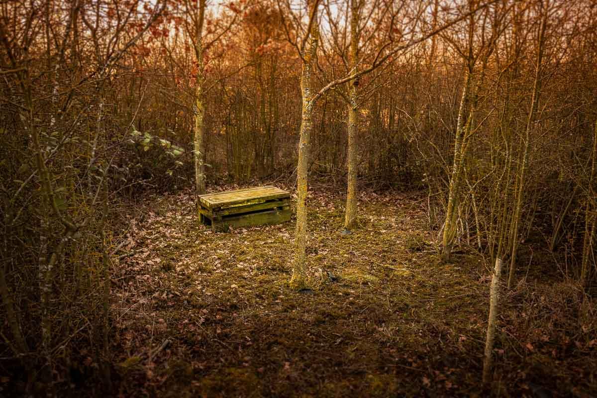 Great Gidding Jubilee Wood 0319