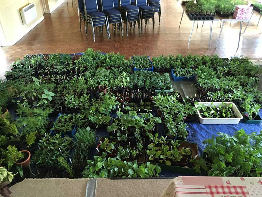 MORE THAN JUST A PLANT SALE