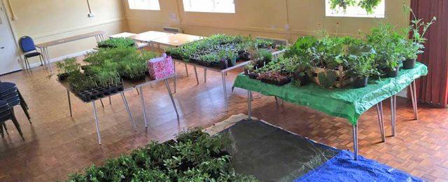 Plants, plants plants!!!!