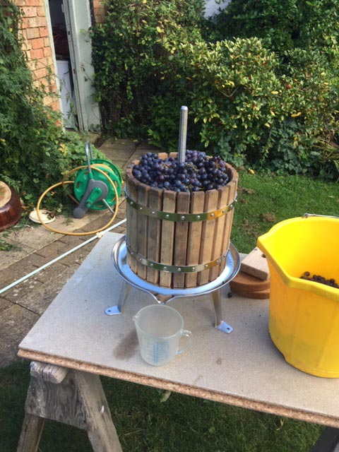 Grape pressing in Great Gidding
