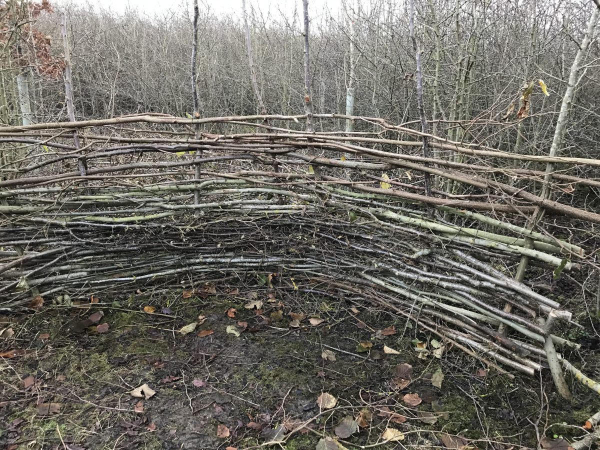 Hazel hide Jubilee Wood 2019