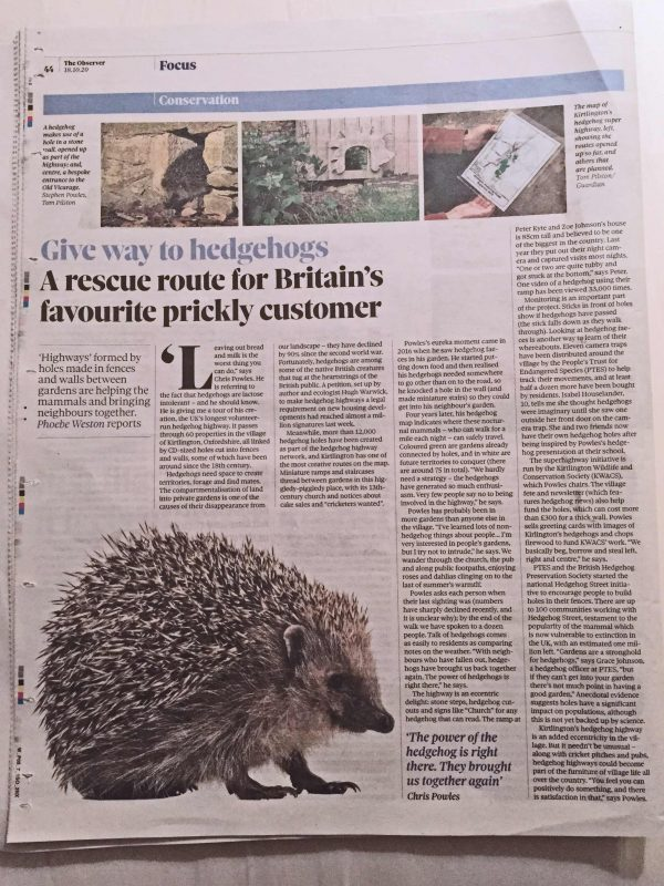 Hedgehog article in The Observer
