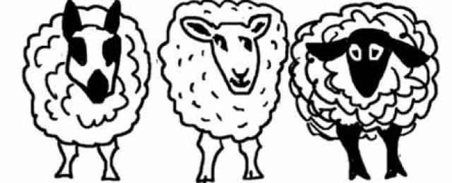 A Sheepish Night at Thurning